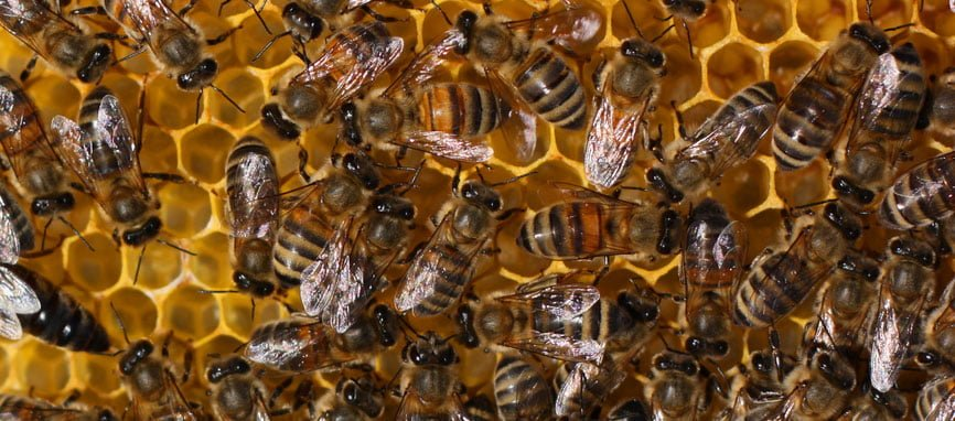 Wire Mesh for Bee Keeping